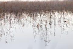 Μια λίμνη με τους καλάμους στην αυγή το φθινόπωρο Στοκ Φωτογραφία