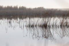 Μια λίμνη με τους καλάμους στην αυγή το φθινόπωρο Στοκ Φωτογραφίες