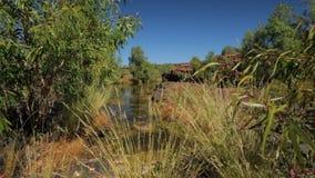 Μια λίμνη waterhole που περιβάλλεται από το Μπους και τους βράχους απόθεμα βίντεο