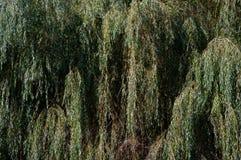 Μια λεπτομερής άποψη της κορώνας δέντρων Στοκ Εικόνες