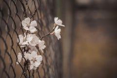 Μια λυπημένη εικόνα ενός λουλουδιού σε έναν φράκτη σιδήρου Στοκ φωτογραφίες με δικαίωμα ελεύθερης χρήσης