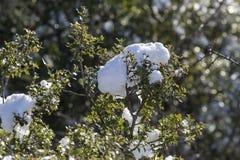 Μια μάζα χιονιού στην κινηματογράφηση σε πρώτο πλάνο κλάδων στοκ φωτογραφία