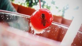 Μια μέλισσα Στοκ φωτογραφίες με δικαίωμα ελεύθερης χρήσης
