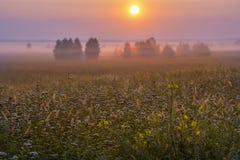 Μια μαγική άνοιξη, θερινό misty πρωί Στοκ φωτογραφία με δικαίωμα ελεύθερης χρήσης