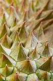 Δέρμα Durian Στοκ Εικόνες