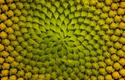 Μια μακρο φωτογραφία ενός λουλουδιού Στοκ Εικόνες