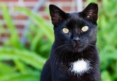 Μια μαύρη γάτα με το χτύπημα των κίτρινων ματιών. Στοκ Φωτογραφίες