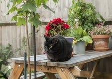 Μια μαύρη γάτα σε έναν κήπο Στοκ Φωτογραφία