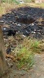Μια μαύρη γάτα στη μέση του μμένου δάσους, που ψάχνει τα τρόφιμα στοκ φωτογραφία με δικαίωμα ελεύθερης χρήσης