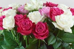 Μια μεγάλη ανθοδέσμη της κόκκινης, ρόδινης και άσπρης κινηματογράφησης σε πρώτο πλάνο τριαντάφυλλων Συγχαρητήρια στις διακοπές στοκ φωτογραφία με δικαίωμα ελεύθερης χρήσης