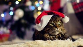Μια μεγάλη γάτα με ένα καπέλο Χριστουγέννων, που κάθεται μεταξύ των κιβωτίων με τα δώρα Χριστουγεννιάτικο δέντρο και φω'τα φιλμ μικρού μήκους
