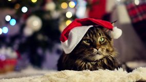 Μια μεγάλη γάτα με ένα καπέλο Χριστουγέννων, που κάθεται μεταξύ των κιβωτίων με τα δώρα Χριστουγεννιάτικο δέντρο και φω'τα απόθεμα βίντεο