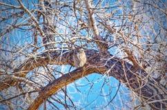 Μια μεγάλη κερασφόρος κουκουβάγια που στηρίζεται σε ένα χειμερινό πρωί Στοκ Εικόνες