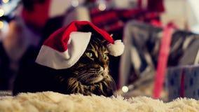 Μια μεγάλη συνεδρίαση γατών μεταξύ των κιβωτίων με παρουσιάζει Χριστουγεννιάτικο δέντρο και φω'τα απόθεμα βίντεο