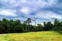 Μια μεγάλες υψηλές δέντρο και διάβαση πεζών στο εθνικό πάρκο Kao Yai, Ταϊλάνδη Στοκ εικόνες με δικαίωμα ελεύθερης χρήσης