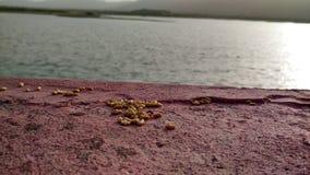 Μια μεγάλη άποψη μερικών κομματιών του ρυζιού με τη φύση Στοκ Εικόνες