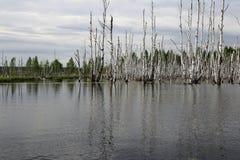 Μια μεγάλη λίμνη με το πλημμυρισμένο δάσος Στοκ Εικόνα