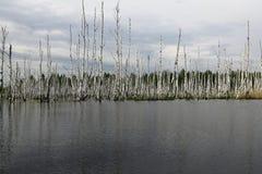 Μια μεγάλη λίμνη με το πλημμυρισμένο δάσος Στοκ Φωτογραφία