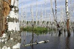 Μια μεγάλη λίμνη με το πλημμυρισμένο δάσος Στοκ φωτογραφία με δικαίωμα ελεύθερης χρήσης