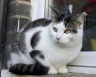 Μια μεγάλη γάτα Στοκ Φωτογραφίες
