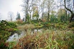Μια μικρή λίμνη κήπων με τους θάμνους και την πολύβλαστη βλάστηση Στοκ Εικόνες