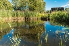 Μια μικρή λίμνη που περιβάλλεται από την πολύβλαστη βλάστηση, κοντά σε μια ξύλινη πορεία Στοκ φωτογραφία με δικαίωμα ελεύθερης χρήσης