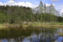 Μια μικρή δασική λίμνη με το μπλε ουρανό στην ηλιόλουστη ημέρα Στοκ εικόνα με δικαίωμα ελεύθερης χρήσης