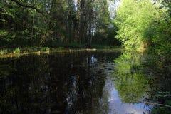 Μια μικρή δασική λίμνη με το μπλε ουρανό στην ηλιόλουστη ημέρα Στοκ εικόνες με δικαίωμα ελεύθερης χρήσης