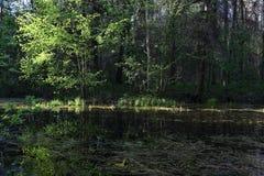 Μια μικρή δασική λίμνη με το μπλε ουρανό στην ηλιόλουστη ημέρα Στοκ Εικόνες