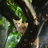 Μια μικρή γάτα στο δέντρο Στοκ φωτογραφία με δικαίωμα ελεύθερης χρήσης