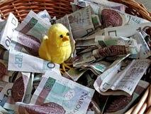 Μια μικρή κίτρινη θχηφφρε σε ένα καλάθι με τα χρήματα εγγράφου Τα χρήματα δεν ραμφίζουν τα κοτόπουλα Πολωνικά τραπεζογραμμάτια εγ στοκ φωτογραφίες