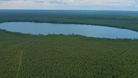 Μια μικρή λίμνη κατά μια μεγάλη σιβηρική δασική εναέρια άποψη απόθεμα βίντεο