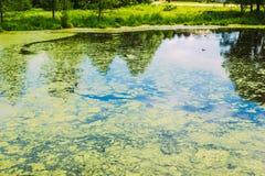 Μια μικρή λίμνη στην πόλη Στοκ φωτογραφίες με δικαίωμα ελεύθερης χρήσης