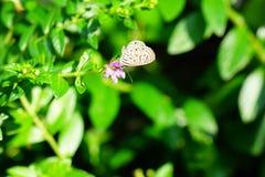 Μια μικρή πεταλούδα Στοκ Εικόνες