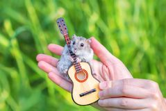 Μια μικρή χάμστερ με μια κιθάρα παιχνιδιών Στοκ Φωτογραφίες