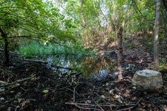 Μια μικρή όμορφη λίμνη στο δάσος Στοκ φωτογραφίες με δικαίωμα ελεύθερης χρήσης