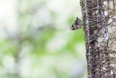 Μια μικροσκοπική πεταλούδα Στοκ φωτογραφία με δικαίωμα ελεύθερης χρήσης