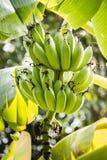 Μια μπανάνα Στοκ Εικόνες