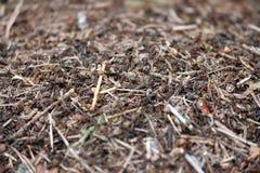 Μια μυρμηγκοφωλιά με τα μυρμήγκια Στοκ Φωτογραφία