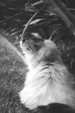 Μια μυρωδιά της φύσης Στοκ φωτογραφίες με δικαίωμα ελεύθερης χρήσης