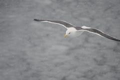 Μια μύγα πουλιών μέσω της θύελλας στη βόρεια Ιαπωνία Στοκ Φωτογραφίες