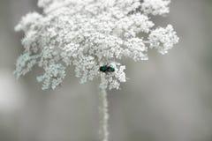 Μια μύγα στα πέταλα λουλουδιών Στοκ εικόνα με δικαίωμα ελεύθερης χρήσης