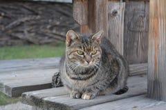 Μια νέα γάτα στοκ φωτογραφία