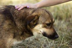 Μια νέα γυναίκα που κτυπά ένα σκυλί Το ευτυχές ζώο χαίρεται, η έννοια της αγάπης και φιλία Blured στοκ εικόνα