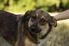 Μια νέα γυναίκα που κτυπά ένα σκυλί Το ευτυχές ζώο χαίρεται, η έννοια της αγάπης και φιλία στοκ εικόνα με δικαίωμα ελεύθερης χρήσης