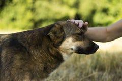 Μια νέα γυναίκα που κτυπά ένα σκυλί Το ευτυχές ζώο χαίρεται, η έννοια της αγάπης και φιλία στοκ φωτογραφία