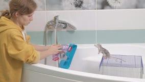 Μια νέα γυναίκα φροντίζει ένα κατοικίδιο ζώο, πλένει έναν λαβύρινθο κάτω από μια βρύση με το νερό και καθαρίζει ένα κλουβί στο λο απόθεμα βίντεο