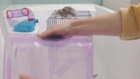 Μια νέα γυναίκα φροντίζει ένα κατοικίδιο ζώο, πλένει ένα τηγάνι κάτω από τη βρύση με το νερό και καθαρίζει το κλουβί στο λουτρό,  απόθεμα βίντεο