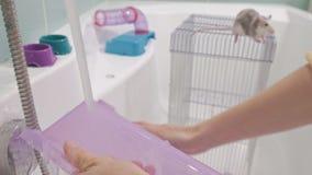 Μια νέα γυναίκα φροντίζει ένα κατοικίδιο ζώο, πλένει ένα τηγάνι κάτω από τη βρύση με το νερό και καθαρίζει το κλουβί στο λουτρό,  φιλμ μικρού μήκους