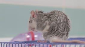 Μια νέα γυναίκα φροντίζει ένα κατοικίδιο ζώο, πλένει ένα τηγάνι κάτω από μια βρύση με το νερό και καθαρίζει ένα κλουβί στο λουτρό φιλμ μικρού μήκους